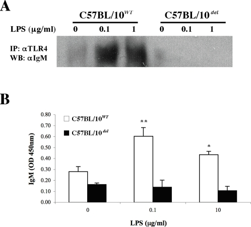 TLR4 and BCR interact in the membrane of LPS-activated B-cells.A. Purified B cells from TLR4WT or TLR4del mice were incubated for 1 hr with 0, 0.1 or 1 µg/ml of LPS, TLR4 was immunoprecipitated and bound proteins were separated by PAGE-SDS and analyzed by western blot using an IgM-specific antibody. D. Purified B cells from TLR4WT or TLR4del mice were incubated for 1 hr with 0, 0.1 or 1 µg/ml of LPS, TLR4 was immunoprecipitated with a specific biotinylated antibody and then captured on streptavidin-coated microplates and bound IgM was detected with a specific HRP-conjugated antibody. * P<0.05 and ** P<0.01 vs. control (no LPS).
