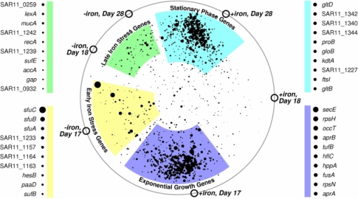 "Genes transcribed during iron limitation were different from stationary phase genes.The four clusters indicate up-regulation of similar condition-specific mRNA. Symbols for each microarray sample (open circles) were manually positioned on a circle according to each sample's iron availability and growth rate. Genes were ""attracted"" to the samples in which they were most abundant. Larger points indicate genes with larger condition-to-condition variation; a key for the 10 largest points in each cluster is provided. The complete list of gene locations for this graph can be found in Supplementary Table S1."