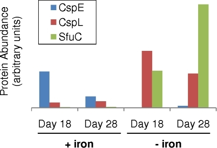 Translation of Ca. Pelagibacter ubique's cold shock and iron-binding genes are influenced by iron availability.The abundance of two Ca. Pelagibacter ubique cold shock proteins, CspE and CspL, and the iron-binding protein SfuC, appear to be correlated with iron availability (p-value of .02, .08, and 3e-79, respectively).