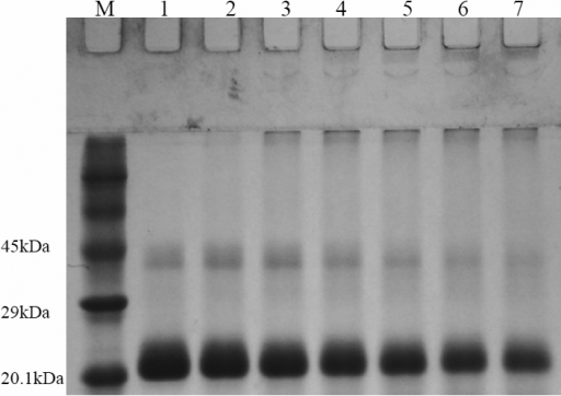 Non-reducing (without β-mercaptoethanol) SDS–PAGE analysis of UV-C irradiated HGDC samples (1 mg/ml) at different exposure times (M: protein marker, Lane 1: 0 min, Lane 2: 10 min, Lane 3: 20 min, Lane 4: 30 min, Lane 5: 40 min, Lane 6: 50 min, Lane 7: 60 min). The dose of UV-C irradiation used was 1,850 μW/cm2.