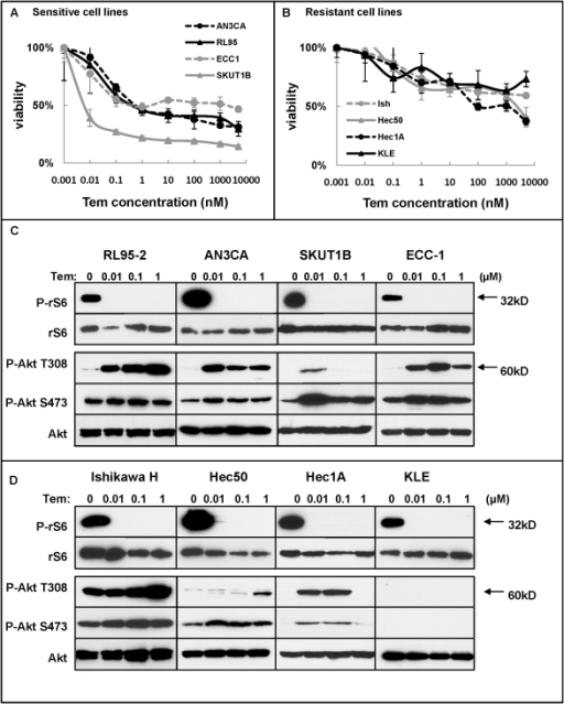 Temsirolimus differentially regulates cell viability and Akt phosphorylation in a dose-dependent manner.A, B, Endometrial cancer cells were treated with increasing doses of temsirolimus for 72 hrs. Results are separated by (A) sensitivity or (B) resistance as determined by cell viability. C, D, Phosphorylation of rS6 (P-rS6) and Akt (P-Akt T308 and P-Akt S473) after treatment with indicated doses of temsirolimus for 72 hrs in temsirolimus-sensitive (C) or temsirolimus-resistant (D) cells was determined by Western blotting. Expression of total rS6 and Akt protein serves as loading controls.