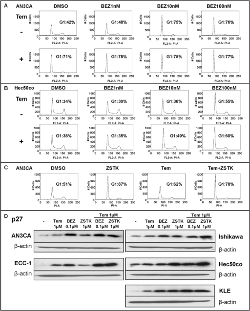 BEZ235 alone or in combination with temsirolimus induces G1 cell cycle arrest and p27 expression.A–B, AN3CA (A) or Hec50co (B) cells were treated for 24 hrs or 72 hrs, respectively, with vehicle (DMSO) or BEZ235 (1 nM–100 nM) in the presence or absence of 1 nM temsirolimus. Cell cycle distribution was analyzed by flow cytometry and the percentage of cells in G1 determined. C, AN3CA cells were treated for 24 hrs with vehicle (DMSO) or ZSTK474 (1 µM) in the presence or absence of 1 nM temsirolimus. Cells were analyzed as in A. D, Expression of the cyclin-dependent kinase inhibitor p27 was assessed by Western blotting 24 hrs after the indicated treatments.