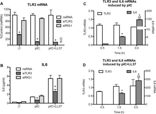 TLR3 is responsible for the enhancement of IL6 production observed in BEAS2B cells.A) A demonstration that a set of three siRNAs to TLR3 (siTLR3) can reduce TLR3 mRNA in BEAS2B cells. siRNAs to RIG-I (siRIG-I) and a nonspecific siRNA (nsRNA) were used as controls. All siRNAs were used at 30 nM. 48 h after transfection with siRNAs, cells were either not stimulated () or stimulated with either poly(I:C) (0.13 µg/ml; pIC) or poly(I:C)+LL37 (3 µM) (pIC+LL37). After 20 h, total RNA was extracted and RT-PCR was performed using primers specific for TLR3 and GAPDH. Data is presented as %Control using corresponding agonist treatment. * Indicates p<0.05 compared to control. B) siRNAs to TLR3 reduced IL6 production induced by poly(I:C) or poly(I:C)+ LL37. The cells were transfected with siRNAs to TLR3 (siTLR3), siRNA to RIG-I (siRIG-I) or a control siRNA as described in A. The culture media were harvested 20 h after the addition of the ligands and the level of secreted IL6 protein determined. Each sample was performed in triplicates and the mean ± SEM shown. * Indicates p<0.05 compared nsRNA in corresponding treatment with agonist. C& D) The abundances of IL6 (right y-axis) and TLR3 messages (left y-axis) in response to the addition of poly(I:C) (C) or poly(I:C)+LL37 (D). The samples used were harvested after poly(I:C) addition to the BEAS2B cell culture media at the times specified in the horizontal axis. The RNAs were then subjected to RT-PCR as described in the materials and methods using either primers specific for IL6 or for TLR3. * Indicates p<0.05 compared to no treatment and ** indicates p<0.05 compared to poly(I:C) treatment. There is no difference (p>0.5) for TLR3 mRNA among any of the treatments or between any of the time points (0.5–3 h).