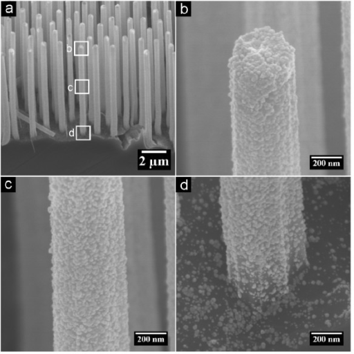 SEM images of Si nanowires deposited with Au for 5 min. (a) Low magnification image showing the morphologies of the whole wires. (b-d) High magnification SEM images showing in detail the morphologies of the top, middle, and root part of a single nanowire, respectively. The rectangles in (a) enclose the regions which are magnified into (b-d).