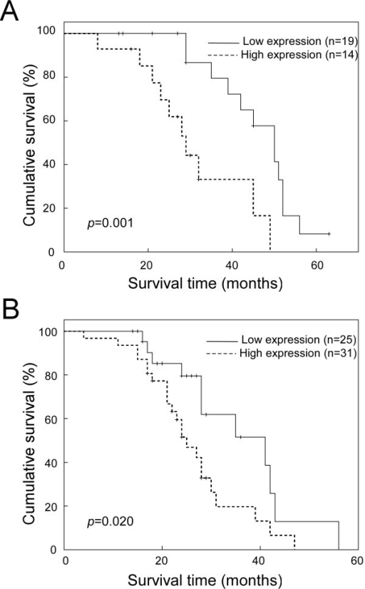 Kaplan-Meier analysis showing the overall survival of NSCLC patients categorized according to the AJCC grades and status of SOX9 expression. The statistical significance of the difference between curves of SOX9 high-expressing and low-expressing patients was compared within subgroups of AJCC grades I+II (A) and III+IV (B). P values were calculated by the log-rank test.