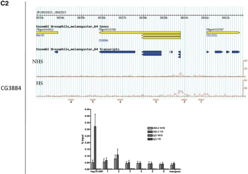 Seven chromosomal regions display increased dMi-2 binding after heat shock. (A) ChIP-Seq identified seven regions which displayed increased dMi-2 binding after heat shock. Chromosomal locations, lengths and fold-enrichment (HS/NHS) are given in the table. Genome browser images of dMi-2 ChIP-Seq tracks from control (NHS) and heat-shocked (HS) cells are shown. Reads are displayed as coverage per base pair (Y axis). (B) All seven regions are close to or overlap with known heat shock genes. Genome browser images of dMi-2 (red) and IgG (green) ChIP-Seq tracks from control (NHS) and heat-shocked (HS) cells are shown. Reads are displayed as coverage per base pair (Y axis). (C) Validation of ChIP-Seq data by ChIP-qPCR. Regions of hsp70, hsp26 and CG3884 that were analysed by dMi-2 and IgG ChIP-qPCR are indicated below the ChIP-Seq profile which is reproduced for comparison. Error bars denote standard deviations from three (hsp70) or two (hsp26, CG3884) biological replicates.