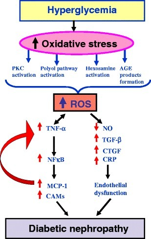 relationship between amyloid i and oxidative stress Moreover, there is a significant correlation of bace1 activity with oxidative   oxidative stress increases production of beta-amyloid precursor protein and.