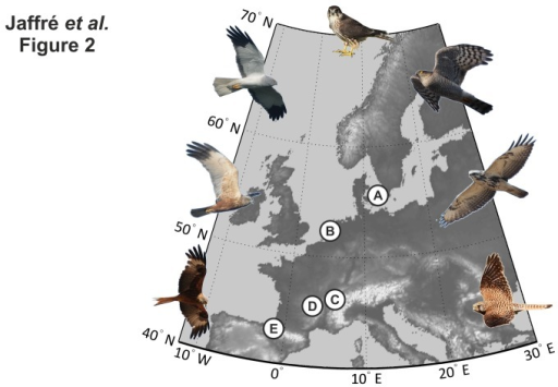 Location of the five sub-regions used in the study:A, Sweden. B, Netherlands. C, French Alps. D, Massif Central. E, Pyrenees.Illustrations of the seven species of raptor from left to right: red kite, marsh Harrier, hen harrier, merlin, sparrowhawk, common buzzard, and kestrel.