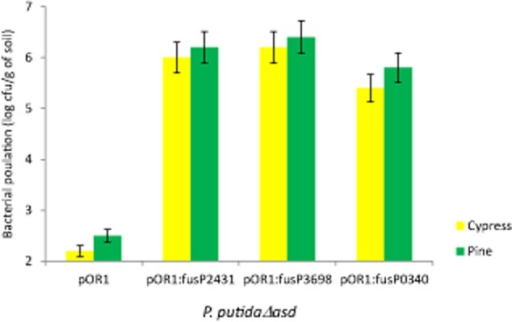 Population size after 2 months in the rhizosphere of P. putida △asd with pOR1 and different transcriptional fusions in pine and cypress. pOR1: plasmid without insert (negative control); pOR1:fusP2431, transcriptional fusion of the asd to the PP2431 promoter, pOR1:fusP3689, transcriptional fusion of the asd to PP3689 promoter, and pOR1:fusP0340, transcriptional fusion the asd with the PP0340 promoter. Population sizes were determined by plate counting in minimal medium supplemented with kanamycin, DAP and amino acids. Experiments were run in triplicate. Transcriptional fusions to verify were chosen at random, error bars show the standard error.