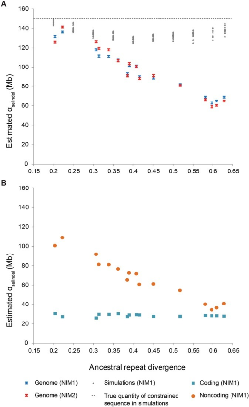 Evolutionary turnover of constrained sequence.A. Quantity of constrained sequence (αselIndel) estimated by NIM1 (blue bars) and NIM2 (red bars) plotted against ancestral repeat divergence for different pairs of eutherian species genomes, with the simulated data (grey) shown under a non-turnover scenario. B. Coding sequence (blue squares) is seen to be broadly conserved, while constrained noncoding sequence (orange circles) shows a strong negative correlation between αselIndel and divergence, indicating rapid turnover.