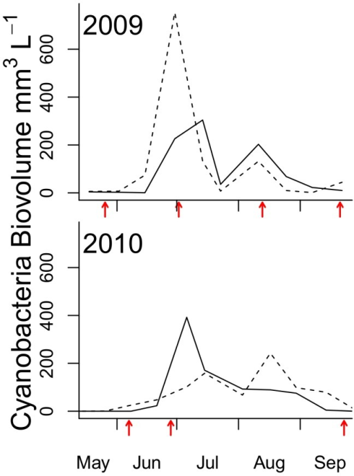 Sampling occasions in relation bloom.Cyanobacteria bloom development in 2009 and 2010 at stn B1 (near sampling stations Håldämman and Uttervik), dotted line, and stn H3 (close to stn Mörkö), solid line. The X-axis is scaled for Julian days and benthos sampling dates are indicated by arrows. See text for the description of bloom composition. In 2010, stn Mörkö was sampled only in late June and September.