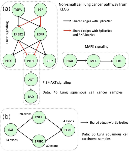 (a) Inferred non-small cell lung cancer pathway using the SpliceNet and RNASeqNet. (b) Re-inferred ERBB2 signaling pathway, but with a reduced sample size.