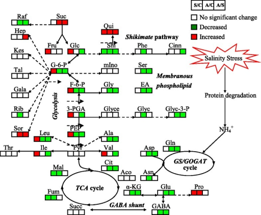 Change in metabolites of the metabolic pathways in leaves of wheat seedlings after 15 d of alkali stress treatment. Proposed metabolic network changes in wheat seedlings subjected to alkali stress, as obtained through OPLS-DA. The metabolites with red boxes denote significant increases; the metabolites with green boxes denote significant decreases (p < 0.05). Salt stress/No salinity stress (S/C); Alkali stress/No salinity stress (A/C); Alkali stress/Salt stress (A/S)