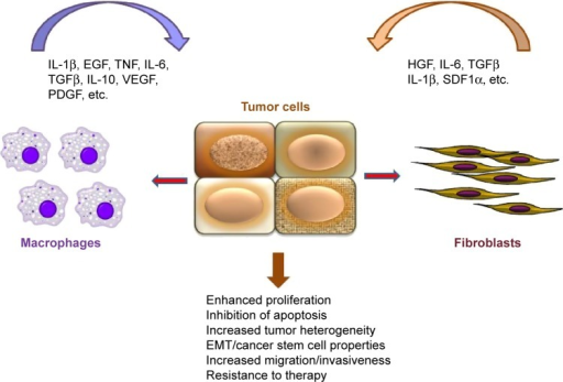 Interplay between tumor cells and stroma. Fibroblasts and macrophages secrete a variety of soluble factors that trigger oncogenic signaling in tumor cells (Wnt, STAT3, NF-κB), resulting in enhanced proliferation, migration, and resistance to therapy. Note that some factors (eg, TGFβ, IL-6) can be produced by both macrophages and fibroblasts. In turn, tumor cells can produce factors, such as TGFβ, IL-1β, and HGF (indicated by red arrows), that activate stromal cells.