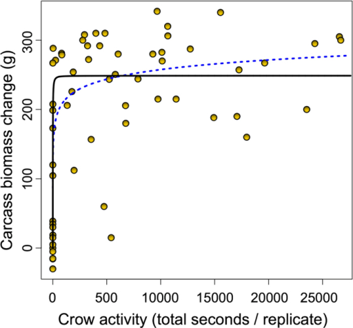 Relationship between crow activity and change in carcass biomass (Zero = no change in the carcass biomass during the course of the experiment).Black solid line is the fit from the Michaelis-Menten asymptotic model (RMSE = 74.4), blue dotted line is the fit from the exponential model (RMSE = 80.0, R2 = 0.49).