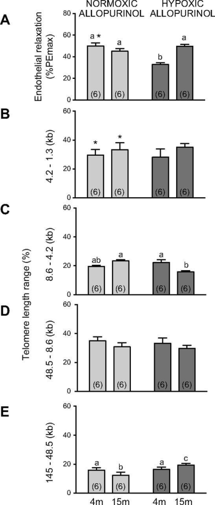 Effects of maternal treatment with allopurinol on endothelial function and vascular telomere length in young and aged offspring of normoxic or hypoxic pregnancy. Values are means ± sem for the femoral response to methacholine (A, endothelial relaxation) expressed as a percentage of the phenylephrine-induced maximal constriction (%PEmax) and for the frequency (%) of aortic telomere length ranges (B, 4.2–1.3 kb; C, 8.6–4.2 kb; D, 48.5–8.6 kb; and E, 145–48.5 kb) in 4- and 15-mo-old offspring of normoxic (stippled bars) or of hypoxic (gray bars) pregnancy following maternal treatment with allopurinol. Numbers of animals for each group are in brackets. Bars with different letters are significantly different (P < 0.05). *P < 0.05 offspring of treated vs. untreated pregnancy (2-way ANOVA and post hoc Tukey's test).