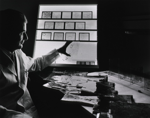 <p>Publicity photo.  Dr. Henry Webster examines tracings of electron micrographs of rat sciatic nerve cross-sections.</p>