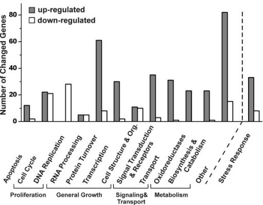Functional categories of genes regulated in MCF-7 cells after 24 h incubation with black cohosh extract. Genes were grouped in 5 large groups (Apoptosis, Proliferation, General Growth, Signaling & Transport, Metabolism), some consisting of subgroups. Genes that are not clearly associated with these groups are summarized in the category others. The category stress response contains genes also grouped into one of the 6 main classes. Each bar represents the number of genes that were up- (dark) or downregulated (white) in the respective group.