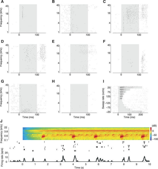 Sound-Evoked Responses in the Unanesthetized Auditory Cortex Are Heterogeneous(A–H) Tone-evoked responses in the auditory cortex of unanesthetized rats are heterogeneous. The panels show response dynamics of eight representative neurons to 60-dB tones. In each panel, dots represent individual spikes, the gray shaded region indicates the tone duration (100 ms). (A) transient onset response; (B) suppressive response; (C) transient onset response followed by sustained excitatory response followed by off response; (D) late onset response followed by strong off response; (E) late onset response; (F) off response; (G) sustained response combined with suppressive response; (H) non-responsive cell. See also Figures S4–S8 for more examples.(I) Example of single neuron responses to 54-dB sweeps. Dots represent individual spikes, the gray shaded regions indicate the stimulus duration.(J) Example of single neuron responses to natural sound (Knudsen's frog). Spectrogram of stimulus is shown at top (red indicated highest intensities and blue indicates lowest intensities), and individual trials are plotted in the middle (ticks represent spikes). Firing rate curve in the bottom of the panel was computed by first summing the spikes in 20-ms bins and then convolving the resulting peristimulus time histogram (PSTH) with a Gaussian (σ = 20 ms). Note the long time scale compared to the other panels.