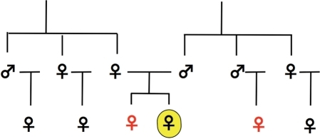 A pedigree analysis of female homosexuality.The focal homosexual individual is highlighted in yellow. Relatives expressing elevated rates of homosexuality are shown in red (based on Table 6 of Pattatucci and Hamer (1995) [41]).