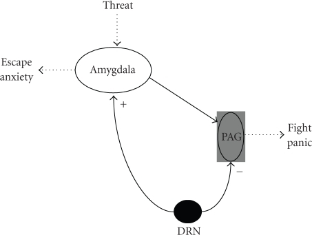 Schematicrepresentation of the dual role of serotonin on fear and anxiety, according toDeakin and Graeff theory.