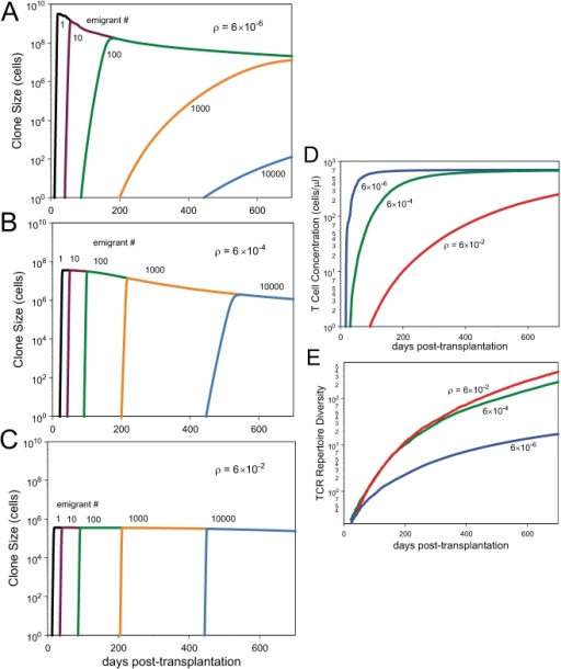 "Clone sizes, T cell concentrations and TCR repertoire diversity.Clone sizes over time as computed under the model of Eqs.(1,4)(A–C) and the corresponding T cell concentrations (D) and TCRrepertoire diversity (E) as a function of time past transplantation.computed under the model of Eqs.(1,4) as a function of time pasttransplantation. Parameter  (see Model section) is varied asindicated while all other parameters are held constant. The higher , the more limiting are TCR-specific resources.""Emigrant number"" refers to the order in whichclones leave the thymus and enter the periphery; emigrant number 1 isthe first clone to arise, etc."