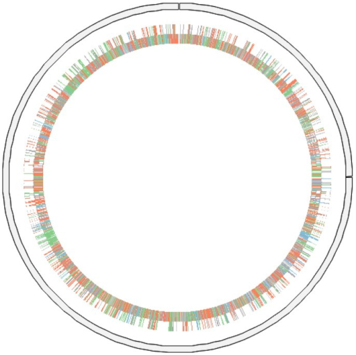 Graphical circular map of the chromosome. Genes are colored according to their COG categories as follows: information storage and processing (blue), cellular processing and signaling (green), metabolism (red) and poorly characterized (grey).