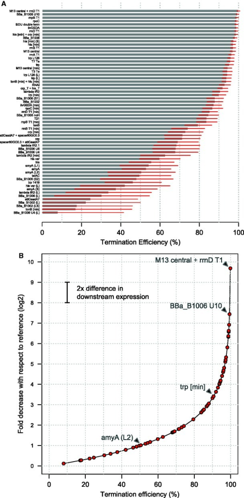 A wide range of termination efficiencies can be measured, enabling monotonic control of transcription read-through and downstream gene expression. (A) Bar chart of termination efficiencies as quantified by flow cytometry for 61 terminator sequences using the RIIIG measurement device. Error bars represent the standard deviation of TE among single cells within a population. Terminators are colored according to their functional categories (inset legend). (B) Mapping of termination efficiencies to transcriptional read-through and expression levels. The chart serves as a quick visual reference to determine fold expression differences arising from the terminators characterized here. For example, swapping 'amyA(L2)' (TE ∼51%) with 'trp[min]' (TE ∼90%) results in a ∼5-fold decrease in downstream gene expression. As a second example, swapping 'BBa_B1006 U10' (TE ∼99.4%) with 'M13 central + rrnD T1' (TE ∼99.9%) also results in a ∼5-fold decrease in downstream gene expression.