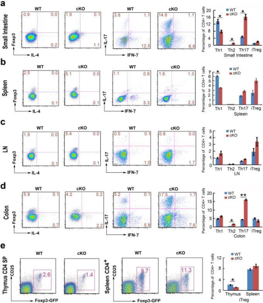 Jmjd3 deletion alters CD4+ T cell populations in different organsFrequency of CD4+ T cell populations isolated from (a) small intestine, (b) spleen, (c) LN, and (d) colon of WT and Jmjd3 cKO mice (e) Frequency of thymic and splenic nTreg cell populations (CD25+CD4+GFP+) from WT and Jmjd3 cKO Foxp3-GFP reporter mice. Mean percentage of the indicated T cell populations ± SD shown as histograms (right panel)(representative of three independent experiments, n = 3 for each group, *p < 0.05 determined by Student's t-test).