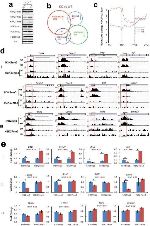 Jmjd3 regulates target gene expression by altering H3K4me3 and H3K27me3 levels(a) Western blot of global H3K4me1/me2/me3 and H3K27me1/me2/me3 levels in thymic CD4+ SP T cells. (b) H3K4me3 and H3K27me3 in WT and Jmjd3 cKO CD4 SP T cells were analyzed by genome-wide ChIP-Seq. Venn diagram showing the numbers of genes with H3K27me3 and H3K4me3 modifications in Jmjd3 cKO cells compared with WT cells. (c) Average H3K27me3 profiles in WT and cKO samples at differentially methylated genes. TSS, transcription start site; TES, transcription end site. (d) T cell-related genes were classified into three groups based on H3K4me3 and H3K27me3 modifications in WT and Jmjd3 cKO CD4 SP thymocytes: group I, increased H3K27 and decreased H3K4; group II, unchanged H3K27 and decreased H3K4; and group III, unchanged H3K27 and H3K4. Red frames indicate the 2 kb region around the TSS. Scale bars represent 5kb region. (e) Validation of methylation changes in WT and cKO CD4 SP thymocytes by ChIP-qPCR (*p < 0.05 determined by Student's t-test).