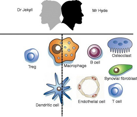 Non-canonical nuclear factor-κB signaling in different cell types in rheumatoid arthritis: Dr Jekyll or Mr Hyde? Schematic overview of the role of the non-canonical nuclear factor (NF)-κB pathway in cell types involved in the pathogenesis of rheumatoid arthritis. On the left side (Dr Jekyll), cells in which non-canonical NF-κB signaling plays an anti-inflammatory role. In the middle (on the dashed line), cells in which this pathway plays a dual role, which is largely dependent on the microenvironment. On the right side (Mr Hyde), cells in which non-canonical NF-κB signaling is pro-inflammatory. Treg, regulatory T cell.
