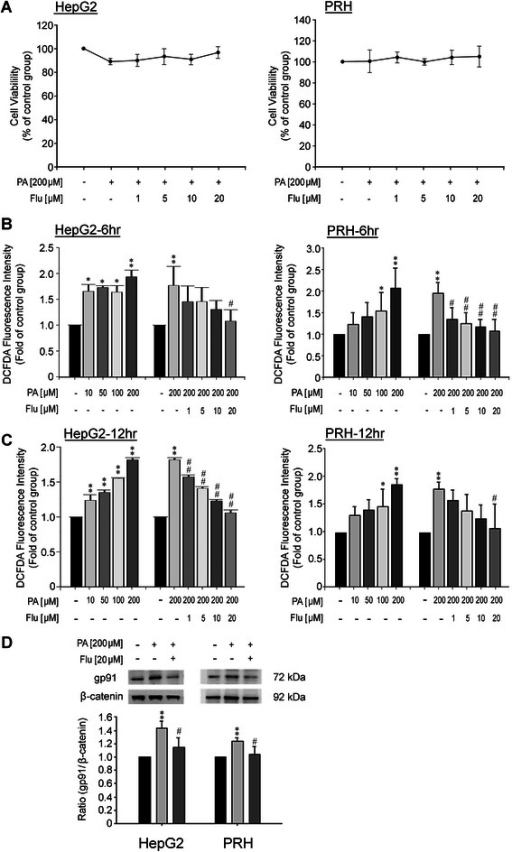 Effects of fluvastatin (Flu) on cell viability, ROS production and NADPH oxidase subunit gp91phoxexpression in HepG2 cells and primary rat hepatocytes (PRHs). (A) Effects of Flu on cell viability of HepG2 cells and PRHs at 24 hr after treatment (n = 3). (B) Flu significantly reduced the reactive oxygen species (ROS) production of PA-treated HepG2 cells and PRHs at 6 hr after treatments. *p < 0.05 and **p < 0.01 vs. control; #p < 0.05 and ##p < 0.01 vs. PA treatment (n = 3). (C) Flu significantly attenuated the ROS production of PA-treated HepG2 and PRHs at 12 hr after treatments. *p < 0.05 and **p < 0.01 vs. control; #p < 0.05 and ##p < 0.01 vs. PA treatment (n = 3). (D) Flu significantly decreased the expression of NADPH oxidase gp91phox in PA-treated HepG2 cells (left panel) and PRHs (right panel). **p < 0.01 vs. control; #p < 0.05 vs. PA treatment (n = 3).