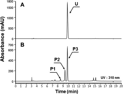 Production of umbelliferone from glucose using B-CM6. A, standard umbelliferone; B, reaction product from B-CM6 (P1, 2-hydroxy p-coumaric acid; P2, p-coumaric acid; P3, umbelliferone).
