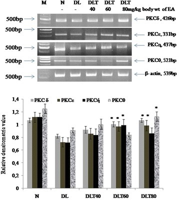 Effect of ellagic acid on gene expression of novel PKC isozymes in liver of DL mice Values are expressed as mean ± SD, * indicates that groups differ significantly from DL at the level of significance p < 0.05 using one way ANOVA followed by Tukey test. N, DL, DLT40, DLT60 and DLT80 represents normal, Dalton's lymphoma bearing, and Dalton's lymphoma bearing mice treated with 40, 60, 80 mg/kg body weight of ellagic acid respectively. EA – Ellagic acid, M- Marker