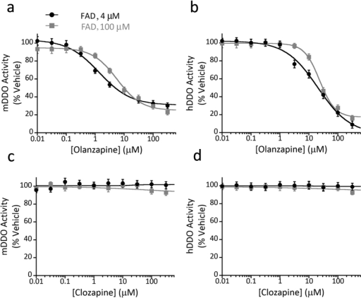 Olanzapine inhibits murine and human D-aspartate oxidase activity.(a–d) Enzyme inhibition assays performed by using recombinant (a,c) mouse DDO (mDDO) or (b,d) human DDO (hDDO) and (a,b) olanzapine or (c,d) clozapine as potential inhibitors. DDO activity in the presence of different concentrations of the antipsychotics (in the 0–300 μM range) and two FAD concentrations (4 and 100 μM) was determined by the Amplex UltraRed assay and an automated liquid handler system. Olanzapine significantly inactivates both mDDO and hDDO, whereas the activity of the two enzymes is unaffected by clozapine. The plots display the mean values ± SD, n = 3.