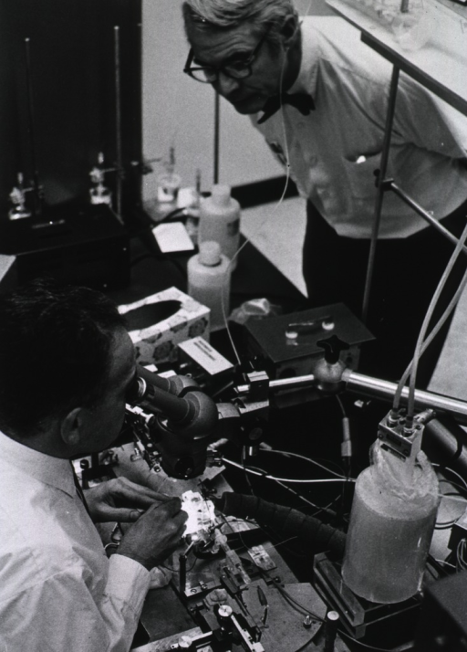 <p>Publicity photo.  Dr. Robert E. Taylor observes the preparation for studying electrical properties of the nerve fiber in marine worms by Leonard Binstock.</p>