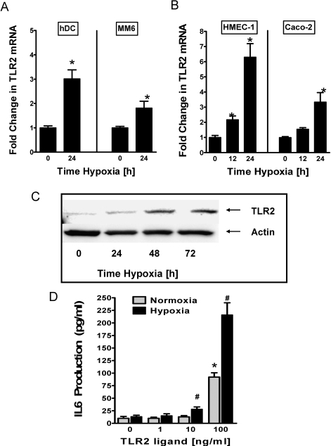 TLR2 transcript, protein and function during hypoxia.