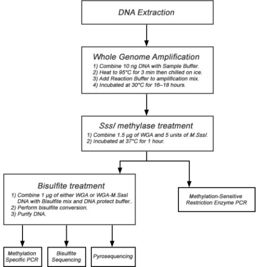Flow diagram demonstrating the steps involved in generation of differentially methylated DNA and the downstream applications of the DNA.