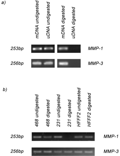 Methylation-Sensitive Restriction Enzyme PCR for MMP-1 and MMP-3. a) PCR using primers spanning the restriction site for MMP-1 and MMP-3 gave a PCR product with mDNA but not with uDNA. In contrast, undigested samples gave PCR products for both mDNA and uDNA. b) PCR using digested DNA from MDA-MB231 (231), MDA-MB468 (468) and HFFF2 identified that the CpG motif is methylated for all three cell lines in the MMP-3 amplicon, but only for MDA-MB468 (468) and HFFF2 for the MMP-1 amplicon, with the MDA-MB231 (231) being unmethylated. However, the undigested DNA gave a PCR product with all three cells lines.