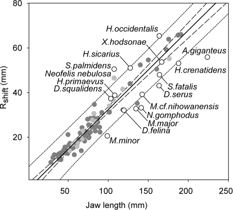 The prey size threshold around which bite depth changes.The prey radius (Rshift) around which bite depth alters plotted against jaw length. Sabretooths, with the exception of Amphimachairodus giganteus has Rshift values similar to extant felids of similar size. Extant Felidae, light grey circles; all other extant carnivoran families, dark grey circles; Sabretooth Felidae open circles and labelled. Linear regression (y0 = −3.103, a = 0.3553, R2 = 0.940, SEE = 3.4839, P = <0.0001) of all extant carnivoran families (sabretooths excluded). Confidence line (dashed) and prediction line (dotted) at 99%. Jaw length is the distance from the tip of the lower canine to the posterior end of the mandibular condyle.