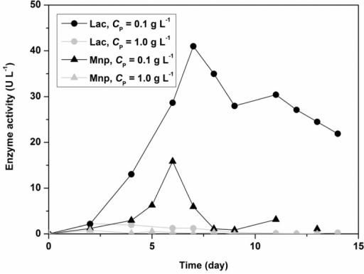 Comparison of laccase (Lac) and manganese peroxidase (MnP) activity obtained from enzyme assays with ABTS (Lac) and DMP (MnP) in batch experiments at a temperature of 30 °C, an initial glucose concentration of 5.50 g L−1, an initial ammonium tartrate concentration of 1.05 g L−1, and an initial Polysorbate 80 concentration (CP) of 1.00 g L−1 (lower curves) and 0.10 g L−1 (upper curves).