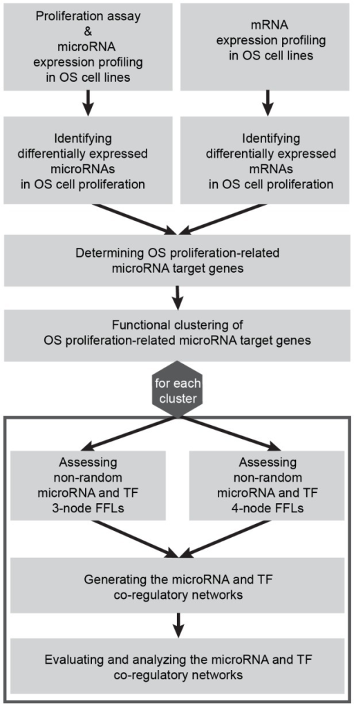 Workflow.The figure illustrates the procedure of the present study determining microRNA and TF co-regulation in OS cell proliferation.