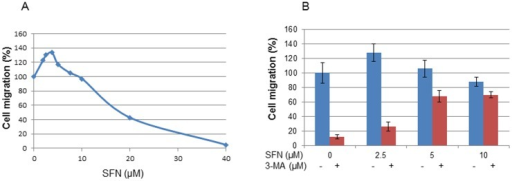 Effects of SFN and 3-MA on cell migration.A: After starvation overnight, bladder cancer T24 cells were treated with SFN at the concentrations indicated for 24 h, cell migration was measured by a cell migration assay using the ThinCert cell culture inserts (Greiner Bio-One Ltd.). Each bar represents the mean ± SD of 3 replicates. B: Effect of pre-treatment of 3-MA on cell migration. DMSO (0.1% was used as a control). Statistical significance from the control, *p<0.05, or **p<0.01.