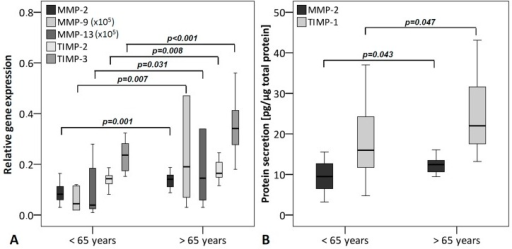 MMPs and TIMPs grouped according to the age of the donors (under 65 years (n = 16) and over 65 years (n = 14)). (A) qRT-PCR was performed to analyze gene expression. The box plot data represent the relative gene expression with 18S as reference gene using the ΔCt method with efficiency correction. The mRNA levels of MMP-2, -9, -13 and TIMP-2, -3 are significantly increased with higher age; (B) Protein levels were analyzed using ELISA and normalized to total protein content (Coomassie Plus assay). Protein levels of MMP-2 and TIMP-1 were significantly elevated with higher age. To allow visualization of all MMPs/TIMPs in one figure, MMP-9 and -13 values were multiplied by 105.