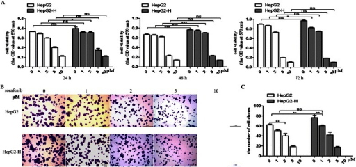 Sorafenib inhibited the enhanced viability of HCC cells after insufficient RFA. HepG2 cells were treated with insufficient RFA (47 °C 5 min, 10 min, 15 min, 20 min and 25 min) gradually. Residual HepG2 (named as HepG2-H) cells surviving from the treatment of 47 °C for 25 min were collected and used for the next experiments. (a) The effect of sorafenib on viability rate of HepG2 and HepG2-H cells was evaluated by MTT assay. Error bars represent the SEM of data obtained in five independent experiments. (b and c) Colony formation abilities of HepG2 and HepG2-H cells after the treatment of sorafenib were assessed. Representive images of the colonies were shown (12.5×) Error bars represent the SEM of data obtained in three independent experiments. P value <0.05 was considered statistically significant; **p < 0.01, ***p < 0.001