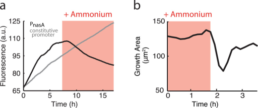 Effects of external ammonium on biofilm development. a, Addition of external ammonium (red shading, 1 mM) represses expression from the PnasA-YFP reporter (black), but does not affect expression from a constitutive reporter (Phyperspank-CFP + 1 mM IPTG, gray). b, Removal of external ammonium (red shading, 13 mM) causes halting of colony growth.