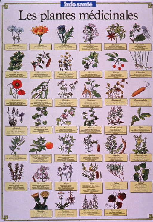 <p>Predominantly white poster with black and white lettering.  Note text at top of poster refers to the monthly publication in which the poster appears.  The publication is intended to be distributed by pharmacists.  Title below note.  Visual images are color illustrations of 40 medicinal plants.  Text accompanying illustrations provides the name of each plant in both French and Latin, the dosage used for infusions, and an indication of what each plant treats.  Verso provides additional detail about plant therapy in general.  Publisher information on verso.</p>
