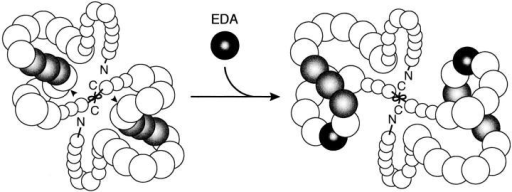 A schematic model  for EDA-induced conformational change of FN. The FN  molecule is folded into a  compact conformation due  to intra- and/or inter-chain  interactions. Insertion of the  EDA segment (black) between CCBD (gray) and the  Hep2 domain rotates the  NH2-terminal region encompassing the NH2 terminus  through the III11 module up  to 180°C relative to the region COOH-terminal to the  inserted EDA segment, leading to a change in the global conformation of the FN molecule. Such a conformational change may increase  the accessibility of the RGD motif within CCBD to integrin α5β1 and/or alter the local conformation of the III10 module so as to optimize the binding of integrin α5β1 to the RGD motif. Arrowheads point to the position of the EDA insertion.
