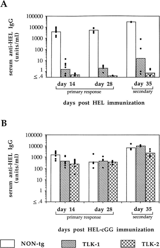 Anti-lysozyme IgG response in high-responder H-2k/b F1  nontransgenic and TLK transgenic mice. (A) Mice were immunized i.p.  with 100 μg HEL in RIBI adjuvant. (B) Mice were immunized i.p. with  25 μg HEL-cGG in RIBI adjuvant. In both cases, day 35 data represent  secondary responses 7 d after boosting with HEL/RIBI or HEL-cGG/ RIBI, respectively. HEL binding IgG was measured by ELISA in serum  of individual mice (dots), and geometric means are shown in bars.