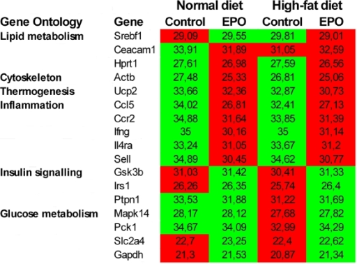 EPO induced changes in muscle gene expression one week after electrotransfer.Significantly differentially expressed genes are depicted according to gene ontology groups. Control and EPO transfected groups were fed either a normal chow or a high-fat diet for one week. Mean Ct threshold is depicted for each group and red corresponds to a high expression value; green indicates a lower expression value (n = 4–5 in each group).
